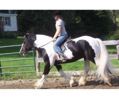 Magníficos 9 años de pura raza de caballo gitano en la venta