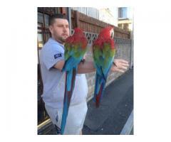 2 Par de papagaios de arara-de-asa-verde.