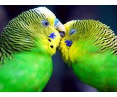 Veterinario de aves silvestres