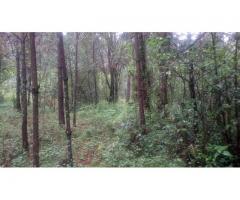 Venta de terreno de bosque cerca a Peña Blanca, por Circuito Avandaro.