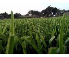 Pasto en rollo y tierra para jardin.