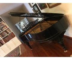 Afinación de pianos Querétaro TODD MUSICAL 1836418