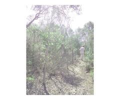 Terreno de 23 hectáreas alambrado